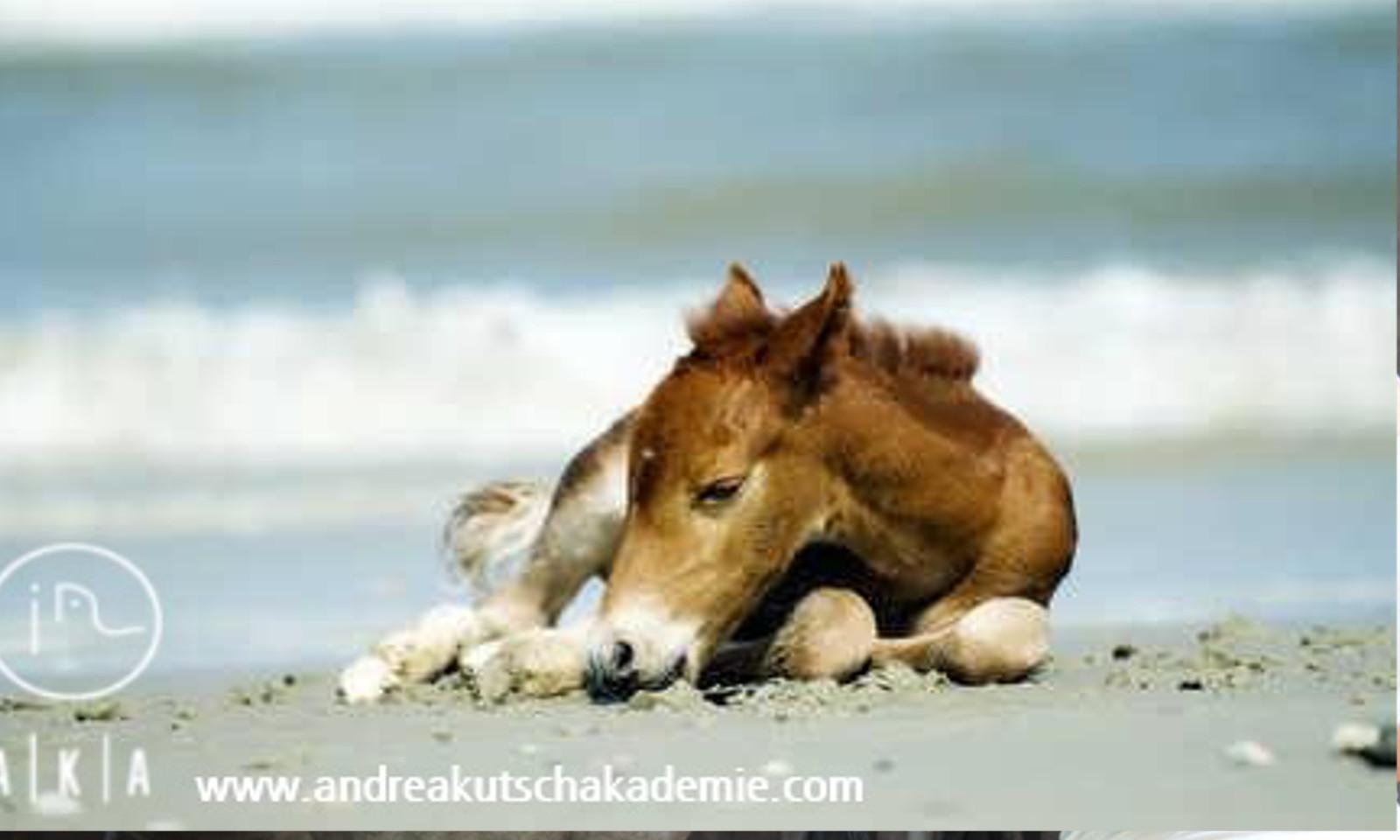 schlaf von pferden beeinflusst deren leistung