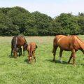 Futter als Belohnung für Pferde