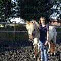 Verladetraining mit einem Equine Coach