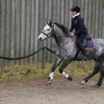 Verstärkung überholt Dominanz in der erfolgreichen Pferdeausbildung