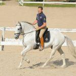 Alleinsein eines Pferdes in der Reithalle muss trainiert werden