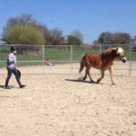 Wie Kinder und Jugendliche zu Pferdeexperten werden