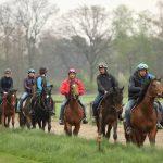 Das Pferdegehirn bestimmt die artgerechte Pferdeausbildung