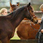 Ausbildung junger Pferde: So klappt es mit dem Anreiten
