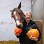 Kürbis fürs Pferd? Ja! Mit einem Kürbis-Rezept zum Pferde-Halloween