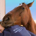 Ist mein Pferd zu dick oder zu dünn? Pferde richtig füttern!