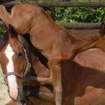 Die Persönlichkeit des Pferdes erkennen: Entscheidend bei der Pferdeausbildung für Dressur und Springen