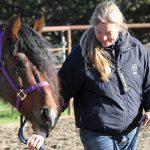 Pferde zu verschenken: Schätze unter struppigem Fell
