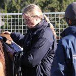 Pferdeverhalten verstehen lernen – durch aktives Beobachten und Aufzeichnen