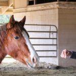 Der Blick in den Kopf deines Pferdes