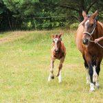 Das Glück der Pferde – wissenschaftlich betrachtet