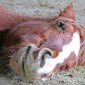 Ist mein Pferd glücklich?
