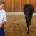 Breite Basis: Bodenarbeit mit dem Pferd