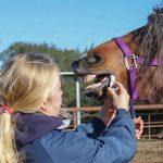 Honig ums Pferde-Maul – Pro und Contra