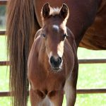 Mit Pferden wohnen: Nur ein Traum?