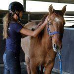 Pferde-Behandlungen aus eigener Hand