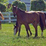 Giftige Pflanzen: Was dein Pferd nicht fressen darf