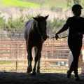Wer ist Boss? Mensch oder Pferd?