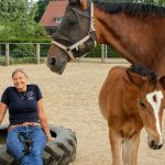 Die Emotionen unserer Pferde