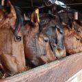 Sporternährung für Pferde