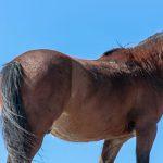 Die Konzentration von Pferden: Wie leicht lässt sich dein Pferd ablenken?