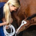 Die Genetik von Pferden bestimmt auch den Charakter