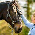 Bodenarbeit mit dem Pferd ist Erfolgsfaktor