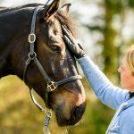 Bodenarbeit mit dem Pferd: Breite Erfolgsbasis