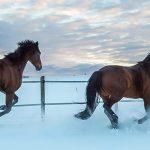 Wann frieren Pferde? Brauchen Pferde Decken?