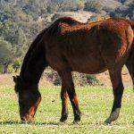 Mit Freude altern – Wie es Pferdesenioren gut geht