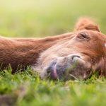Mach mal Pause: Warum junge Fohlen nicht täglich trainiert werden sollten