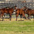 Rhythmus der Pferde - Chronobiologie beachten