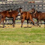 Der Rhythmus der Pferde: Chronobiologie schafft Verständnis
