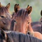 Den Stress im Verborgenen vermeiden: Warum du dein Pferd behutsam an ein Gebiss gewöhnen solltest.