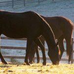 Gesund und fit durch den Winter:  Wie Du den Atemweg Deines Pferdes in der kalten Jahreszeit schützt
