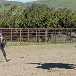 Pferde in Anlehnung reiten: Mit sanfter Hand zur Kraft