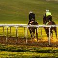 Geläuf Pferde Rennsport