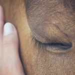 Emotionen der Pferde und die Gefahr der menschlichen Interpretationen