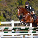 Neue Herausforderungen in der Pferdewirtschaft