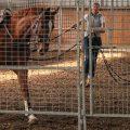 Pferde-Atmung – Probleme, Hilfe, Heilung
