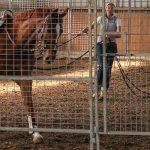 Die Atmung beim Pferd kontrollieren und beurteilen