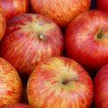 Äpfel fürs Pferd giftig?