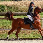 Kontrolle über Nasenband kann Knochenschädigungen beim Pferd verursachen