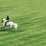 Dein eigenes Pferd – mit welchem Aufwand Du rechnen solltest